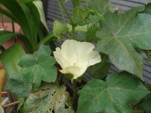 Wata_flower1
